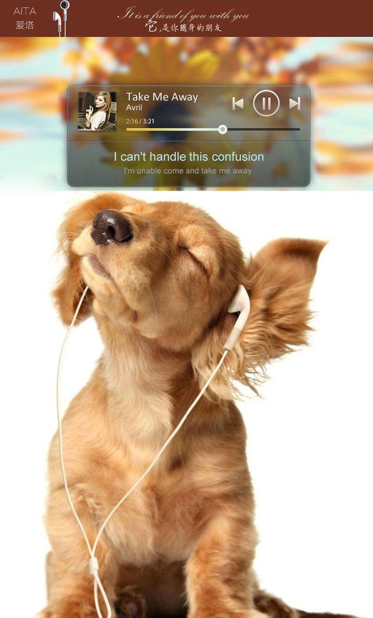 动物戴耳机gif